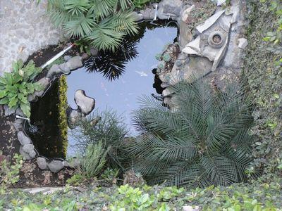 como les haba comentado cuando me present el estanque de las koi sera el primero que realmente diseo con el fin de albergar vida por lo que todo consejo